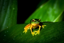 An inquisitive little frog