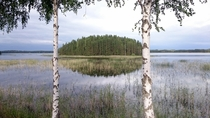An island between two birches Punkaharju Finland phone quality