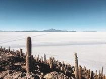 An island of cactuses and a vast desert of salt all  feet above sea level in one of the most otherworldly places Ive ever seen Salar de Uyuni Bolivia