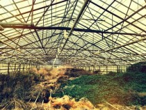An old abandoned greenhouse