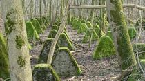 An old antitank barrier in Germany overgrown with moss