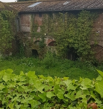 An old building which used to house farming equipment in Ireland Mother Nature is slowly taking it back