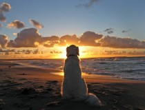 An old dog enjoying the sunset