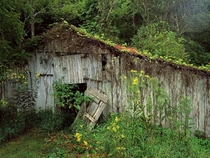 An Old Overgrown Barn