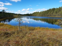 An unnamed swamp pond in Pieksmki Finland