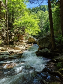 An unnamed tributary of the Nolichucky Cherokee National Forest Appalachian Mountains