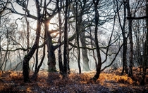 An winter morning on Brocton Coppice in Staffordshire