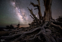 Ancient Bristlecone Pine Forest amp Milky Way