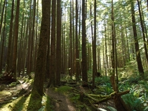 Ancient Indian Portage Trail on Quadra Island British Columbia Canada