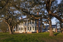 Ancient Oaks surround  Colonial Plantation  Wiley Hill Homestead - Bastrop County Texas