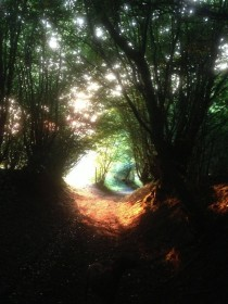Ancient pathway Herts England