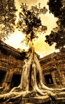 Ancient tree roots over abandoned Tomb Raider location Siem Reap Province