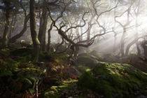 Ancient woodland in Peak District UK by James Mills