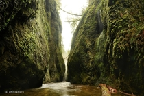 And this is what Oneonta Gorge looks like in the winter Water dripping from every wall So fucking magical I would have explored all day but my feet were numb after a hour