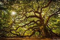 Angel Oak Tree photographed by me Serge Skiba of EarthCaptured Photography