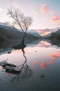 Another angle of the lone tree on LLyn Padarn - Snowdonia