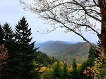 Another Appalachian autumn Newfound Gap GSMNP