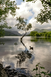 Another beautiful day at the Lonely Tree Llyn Padarn North Wales  Ste Clayton Photography