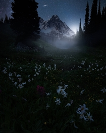 Another foggy twilight watching the Andromeda Galaxy rise over Mt Rainier from the South in the Indian Henry Wilderness Mt Rainier Washington by blazing_heavens