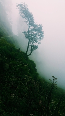 Another Misty Photo from the Billing - Baragaram Hike Himalayan India