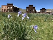 Another pic from Bodie California