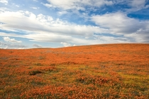 Antelope Valley California Poppy Reserve CA