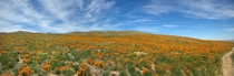 Antelope Valley California Poppy Reserve May  by John Fowler  HI_Res link in comments
