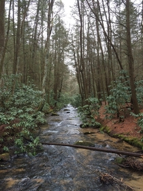 Appalachian Trail in Blue Ridge Georgia