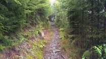 Appalachian Trail in the Great Smoky Mountains National Park