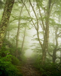 Appalachian Trail on a foggy day Shenandoah National Park Virginia natureprofessor