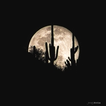 Aprils Pink Moon in the Sonoran Desert