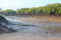 Arabian sea mangroves during low tide