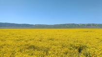 Are we calling it a Hyperbloom yet Carrizo Plain CA US  OC
