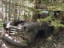 Are we still posting abandoned cars with trees growing through them  Chevrolet Fleetline Sportsmaster