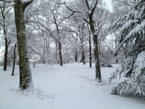 Arnold Arboretum in Winter Jamaica Plain MA