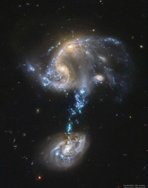 Arp  consists of  galaxies that collided within the past  million years A tidal tail of material was pulled between them and started the birth of large high mass blue-white stars The tidal tail is over  light years across Eventually it will merge into one