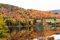 As Requested- Allegany State Park NY - Fall  -