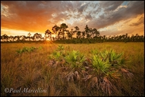 As the storm breaks Everglades Florida by Paul Marcellini