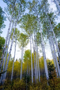 Aspen Grove - Alpine Loop Utah