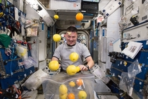 Astronaut Kjell Lindgren Corrals the Supply of Fresh Fruit