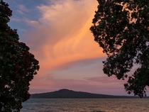 Auckland New Zealand Rangitoto and pohutakawas at sunset  by diffused