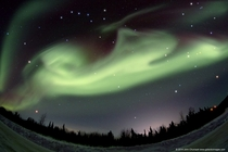 Aurora dog over Alaska In March  astrophotographer John Chumack captured this most unusual aurora near Fairbanks A jumping dog complete with a curly tail Planets visible include bright Jupiter through the dogs front legs and reddish Mars below the dogs hi