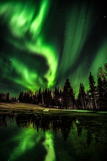 Aurora in the Boreal Forest in Prince Albert National Park Canada