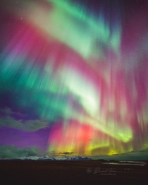 Auroral Beauty