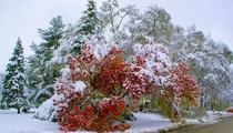 Autumn and Winter Collide - Massive Storm Damage - Illinois US