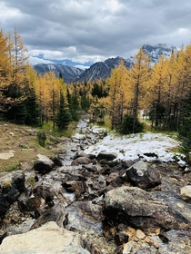 Autumn at its finest Larch Valley AB