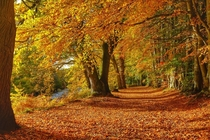 Autumn beside the River Earn Scotland  x