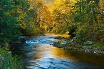 Autumn colors at a wild river central Appalachians