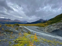 Autumn colors at Exit Glacier in Kenai Fjords National Park Alaska