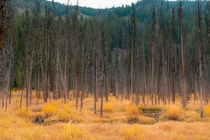 Autumn colors deep in the Idaho Backcountry Idaho USA